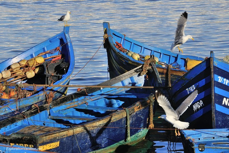 blue fishing boats with sea gulls