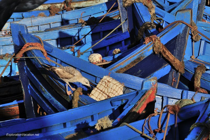Morocco 9 DSC_8183 blue boats in Essaouira's harbor