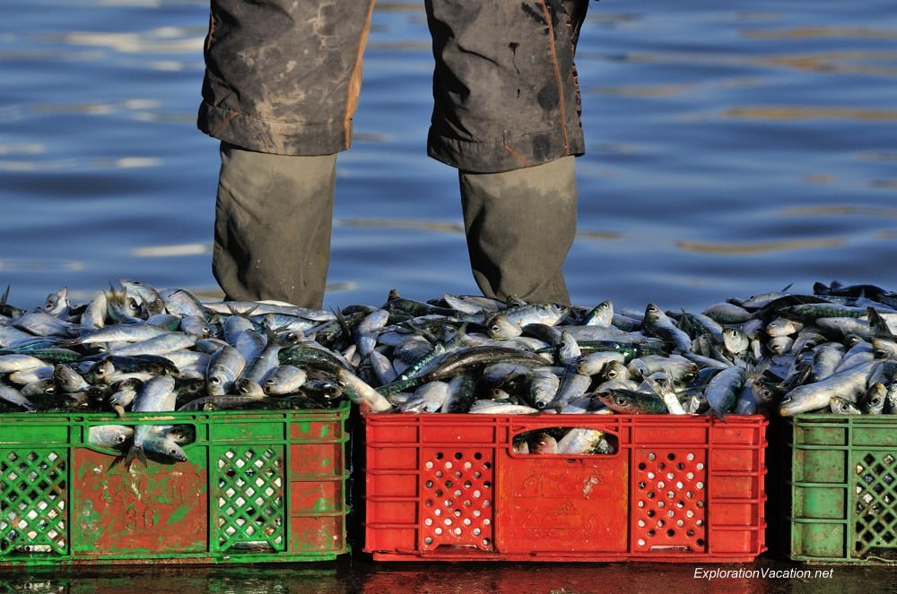 Essaouira fish market 30 DSC_8243 Morocco