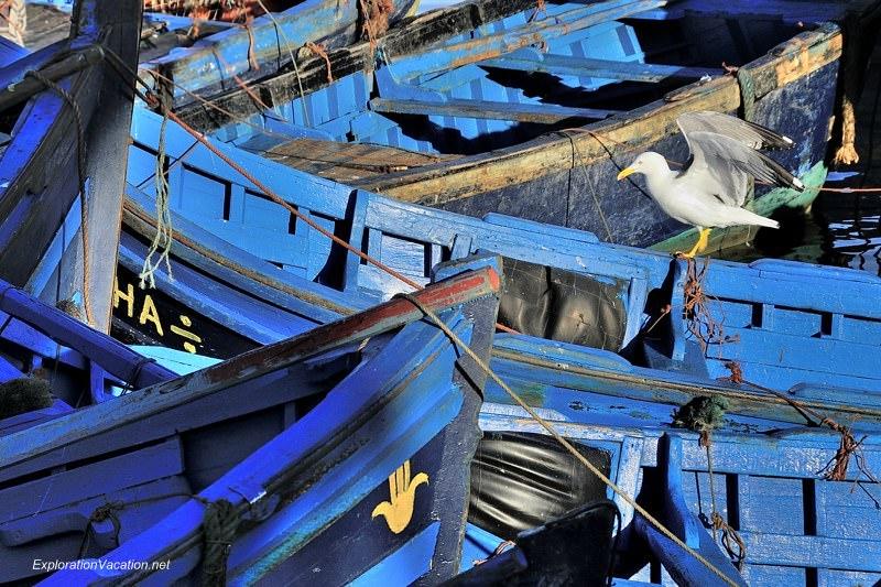 Essaouira fishing 8 DSC_8219 Morocco