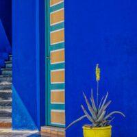 blue and yellow at majorelle garden marrakech morroco