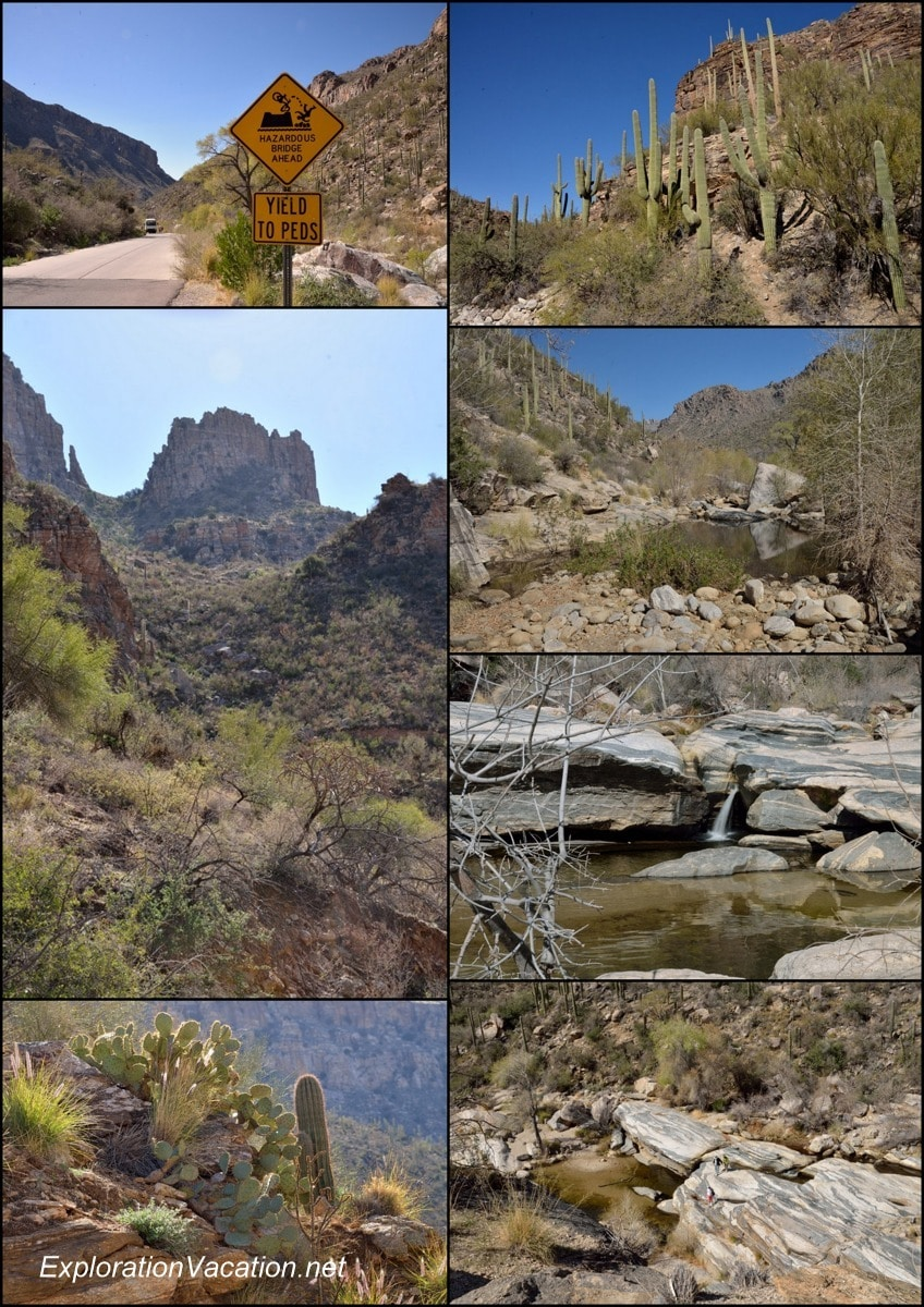 Sabino Canyon collage