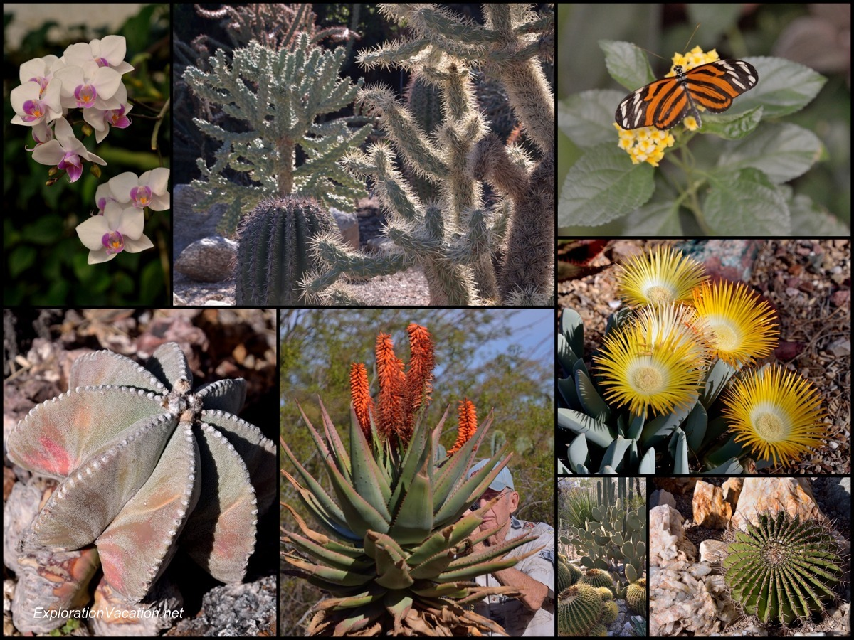 collage of butterflies, cacti, and flowers