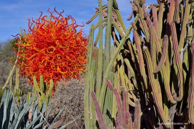 Chihuly at the Desert Botanical Garden Phoenix Arizona 20140215-DSC_5520