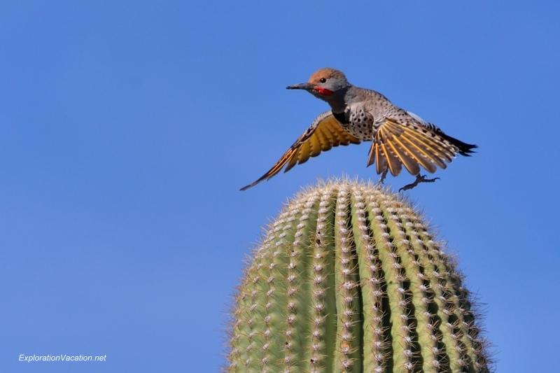 Chihuly at the Desert Botanical Garden Phoenix Arizona 20140215-DSC_5548