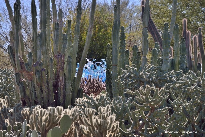 Chihuly at the Desert Botanical Garden Phoenix Arizona 20140217-DSC_6170