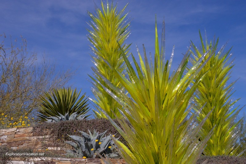 Chihuly at the Desert Botanical Garden Phoenix Arizona 32 20140215-DSC_5592