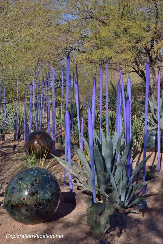 Chihuly at the Desert Botanical Garden Phoenix Arizona 40 20140215-DSC_5508