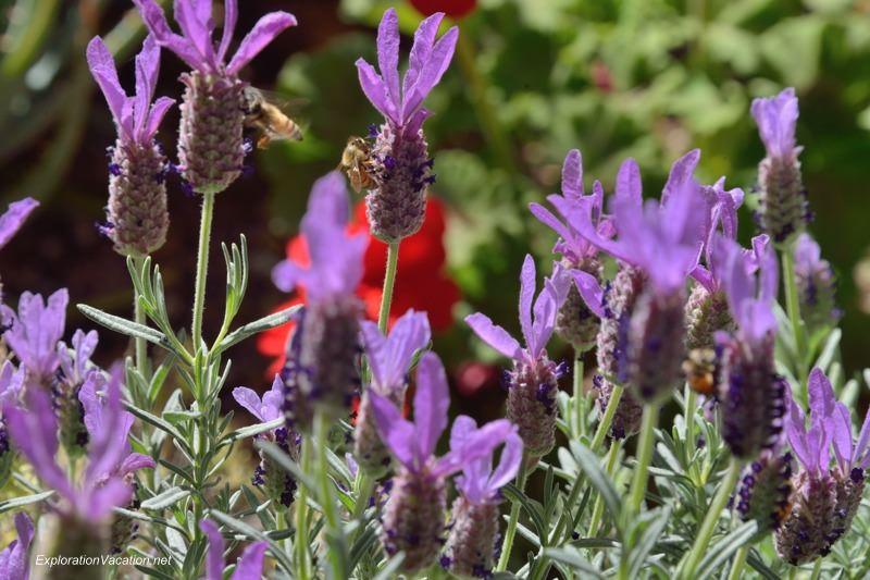 Desert Botanical Garden Phoenix Arizona 14 20140217-DSC_6155