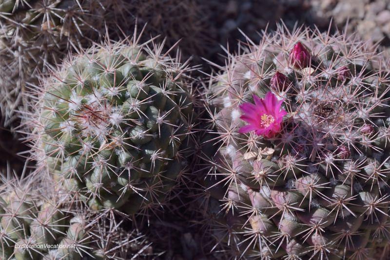 Desert Botanical Garden Phoenix Arizona 16 20140217-DSC_6175