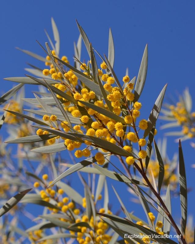 Desert Botanical Garden Phoenix Arizona 2 20140217-DSC_6277