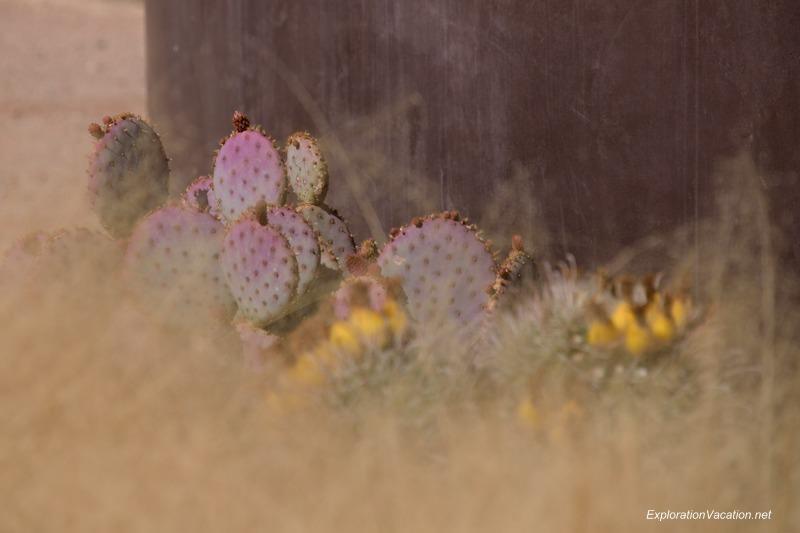 Desert Botanical Garden Phoenix Arizona 20 20140217-DSC_6094