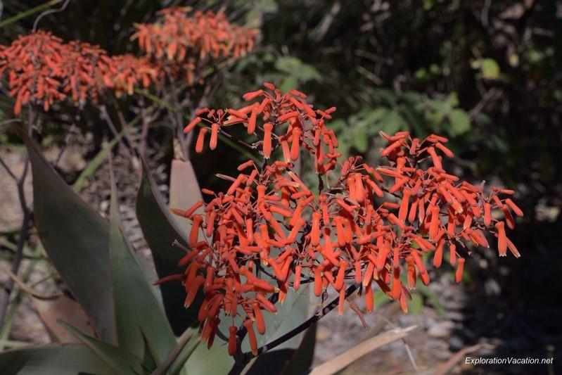 Desert Botanical Garden Phoenix Arizona 22 20140217-DSC_6214