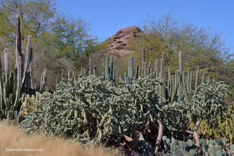 Desert Botanical Garden Phoenix Arizona 4 20140217-DSC_6100