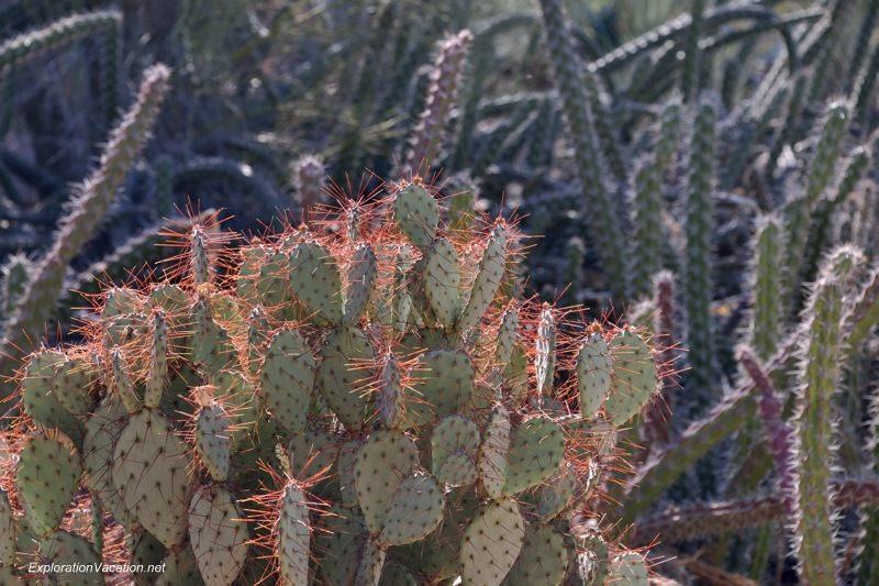 Desert Botanical Garden Phoenix Arizona 6 20140217-DSC_6276
