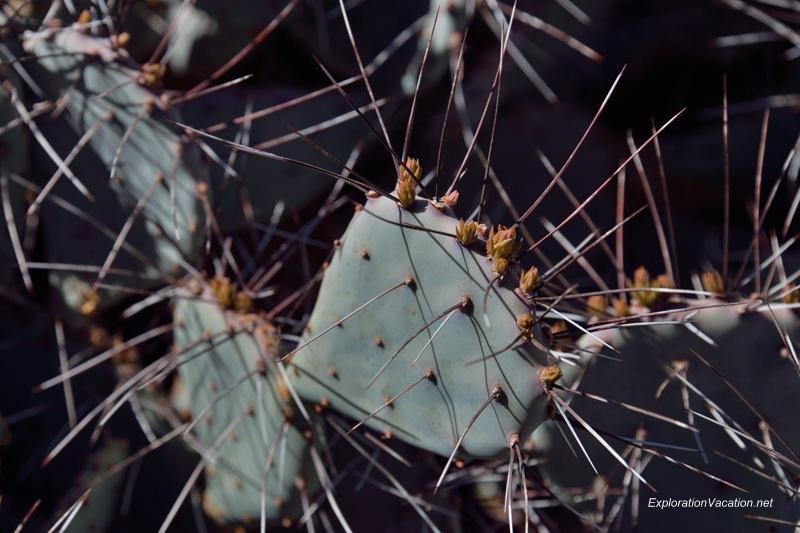 Desert Botanical Garden Phoenix Arizona 8 20140217-DSC_6115