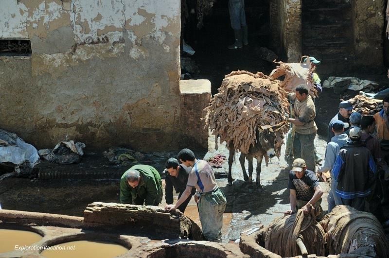 Tannery in Fes Morocco -14 DSC_1721