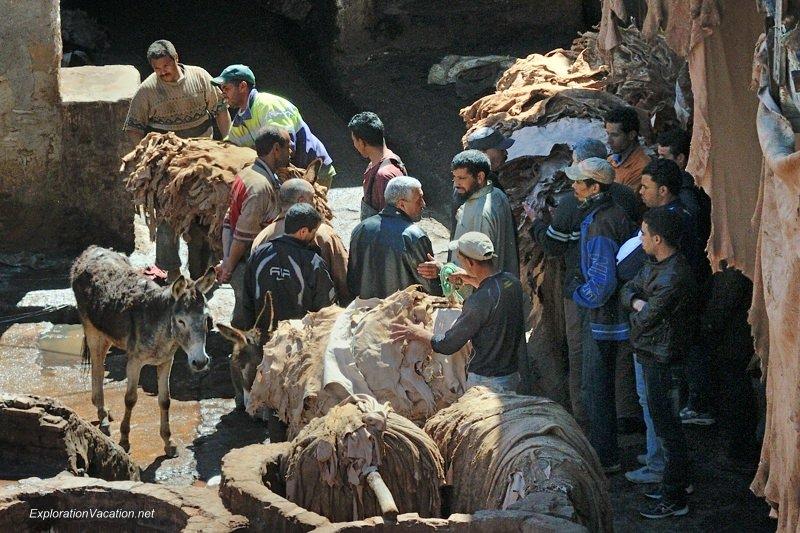 Tannery in Fes Morocco -16 DSC_1731