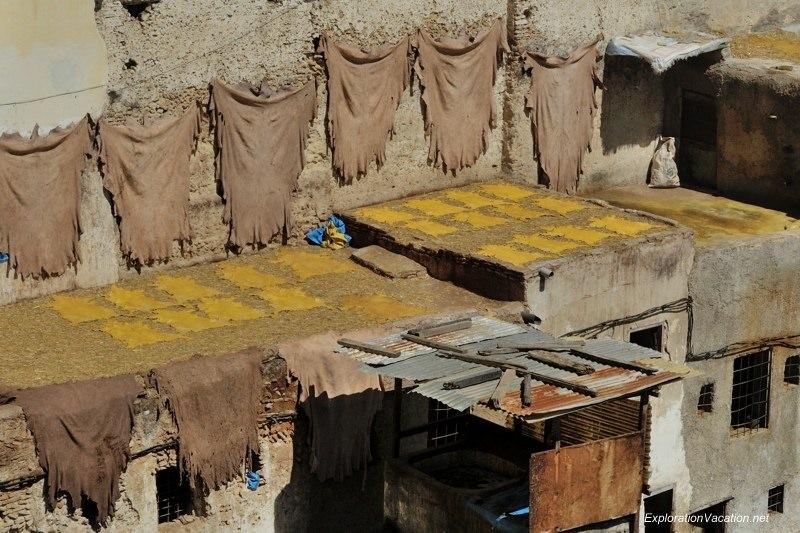 Tannery in Fes Morocco -17 DSC_1654