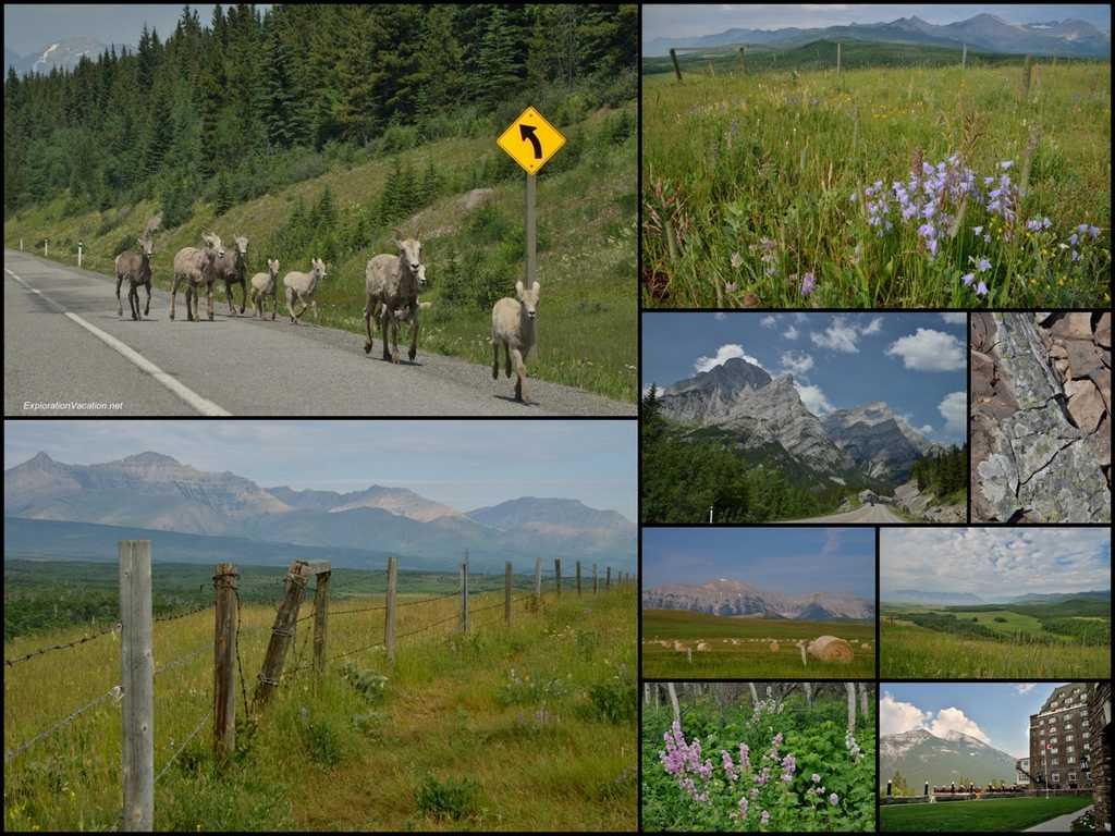 mountain shieep and scenery