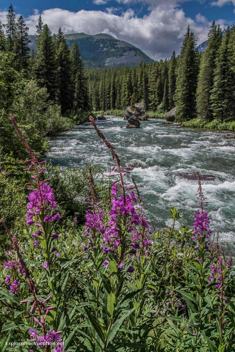 20140726-DSC_9390 Maligne River Jasper NP Canada