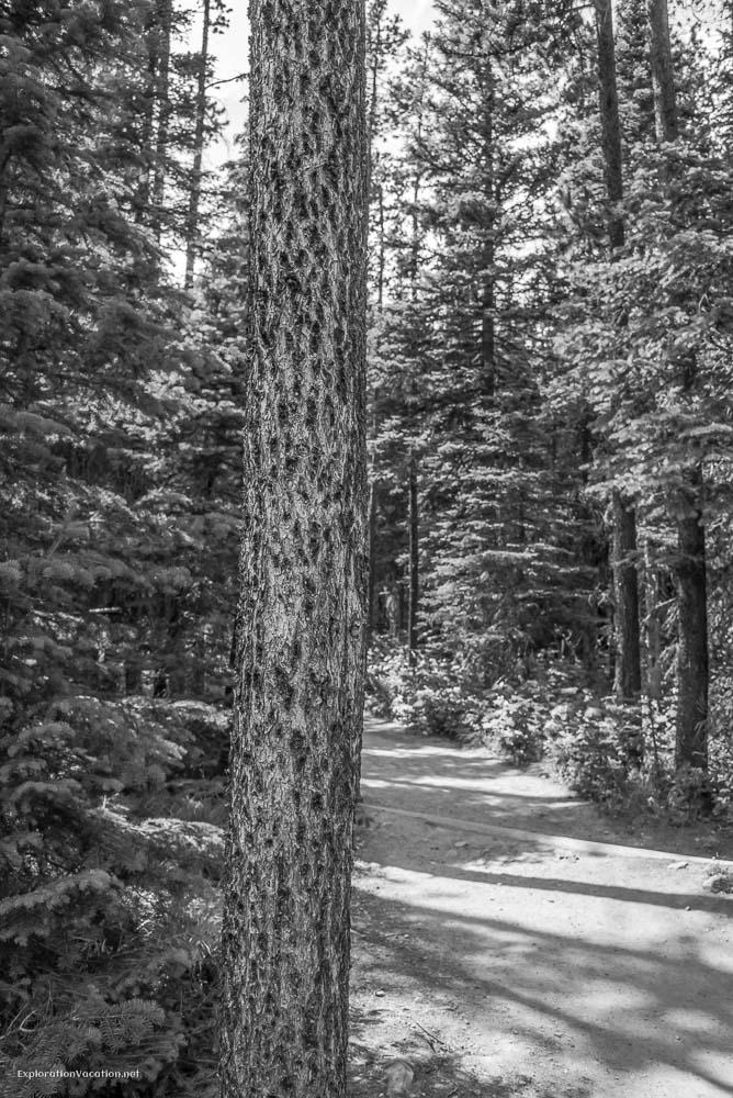 Hiking Red Rock Canyon and Blakison Falls Waterton NP Canada 17 20140713-DSC_3530BW