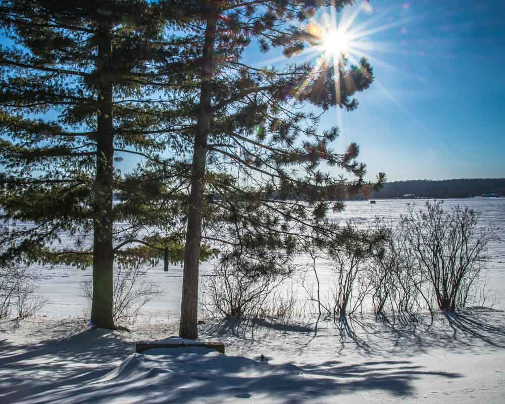 two pine trees and shrubs with sun and a snow-covered lake