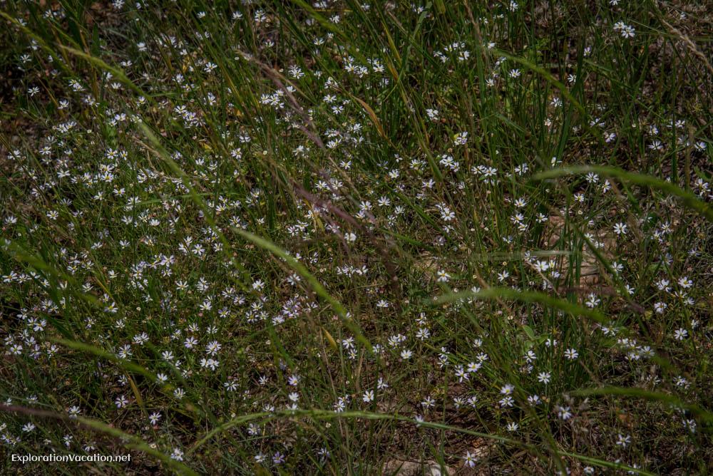 Ladybird Johnson Wildflower research center Austin Texas - Explo