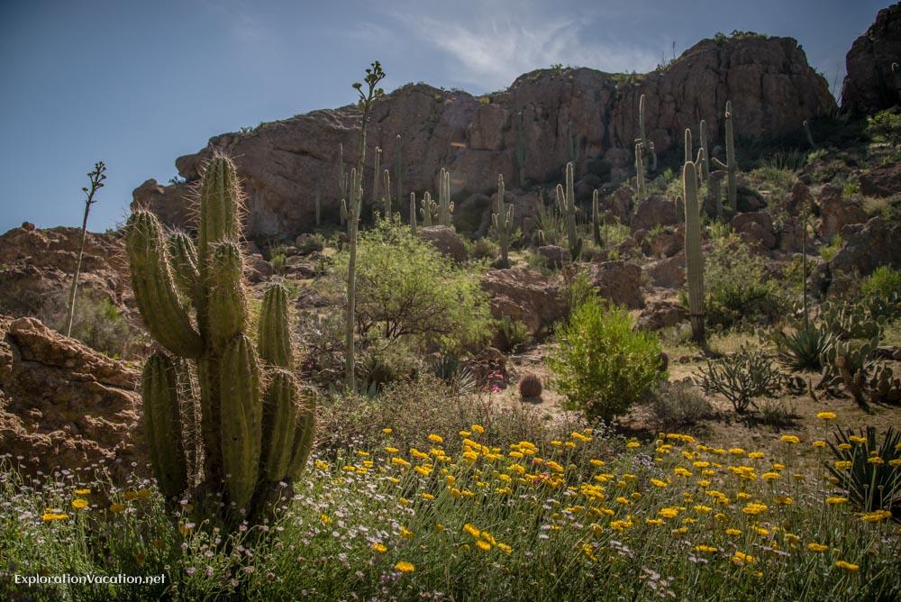 Boyce Thompson Arizona - ExplorationVacation.net