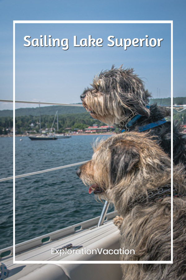 Two dogs looking across a harbor from a sailboat