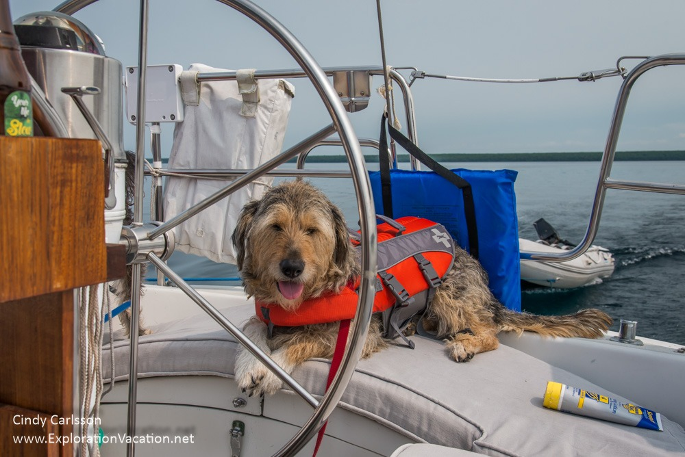 dog with a life jacket sitting at the wheel of a sailboat