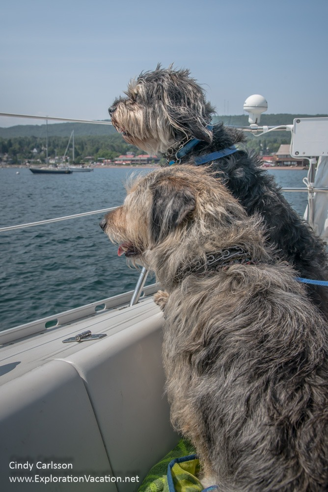 two dogs looking at a harbor from a sailboat