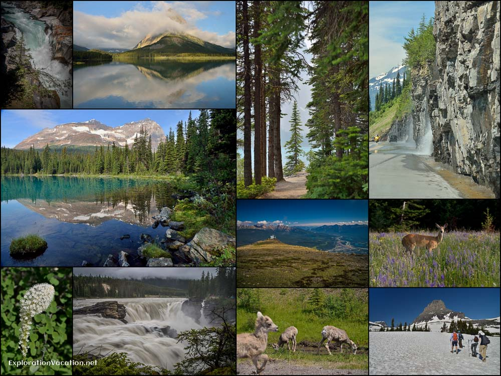 Collage - Rocky Mountain Summer