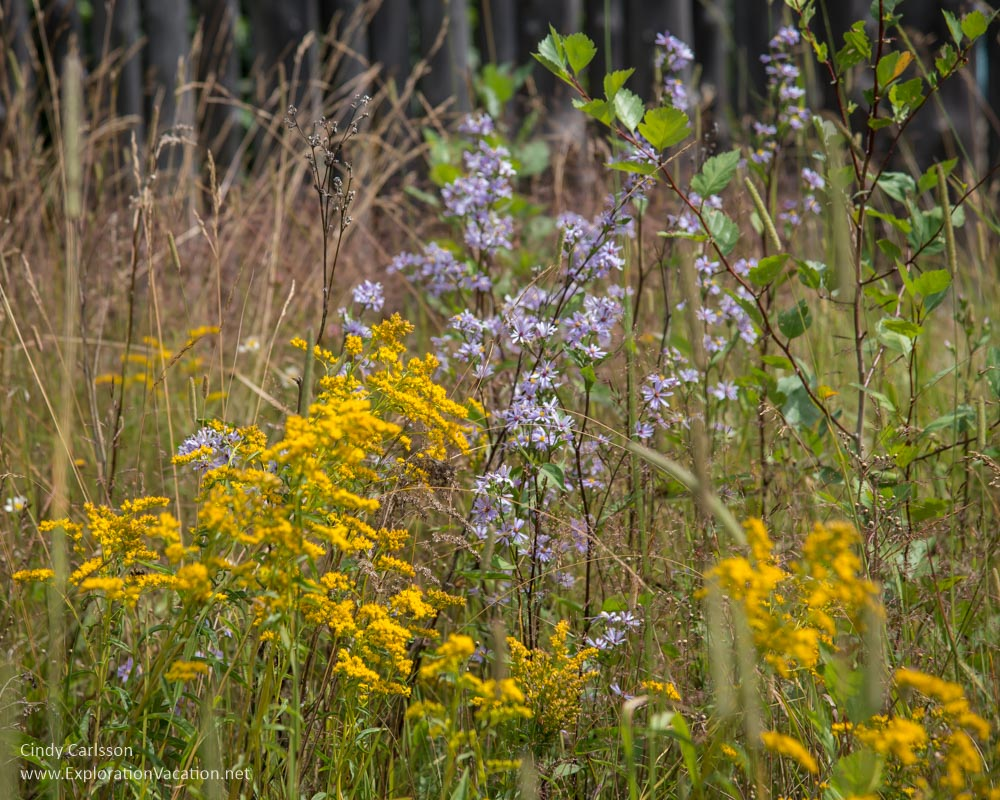 fall flowers at Grand Portage Minnesota
