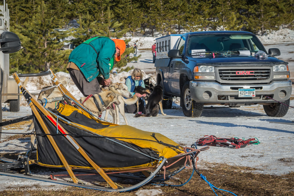 sled and mushers with dogs