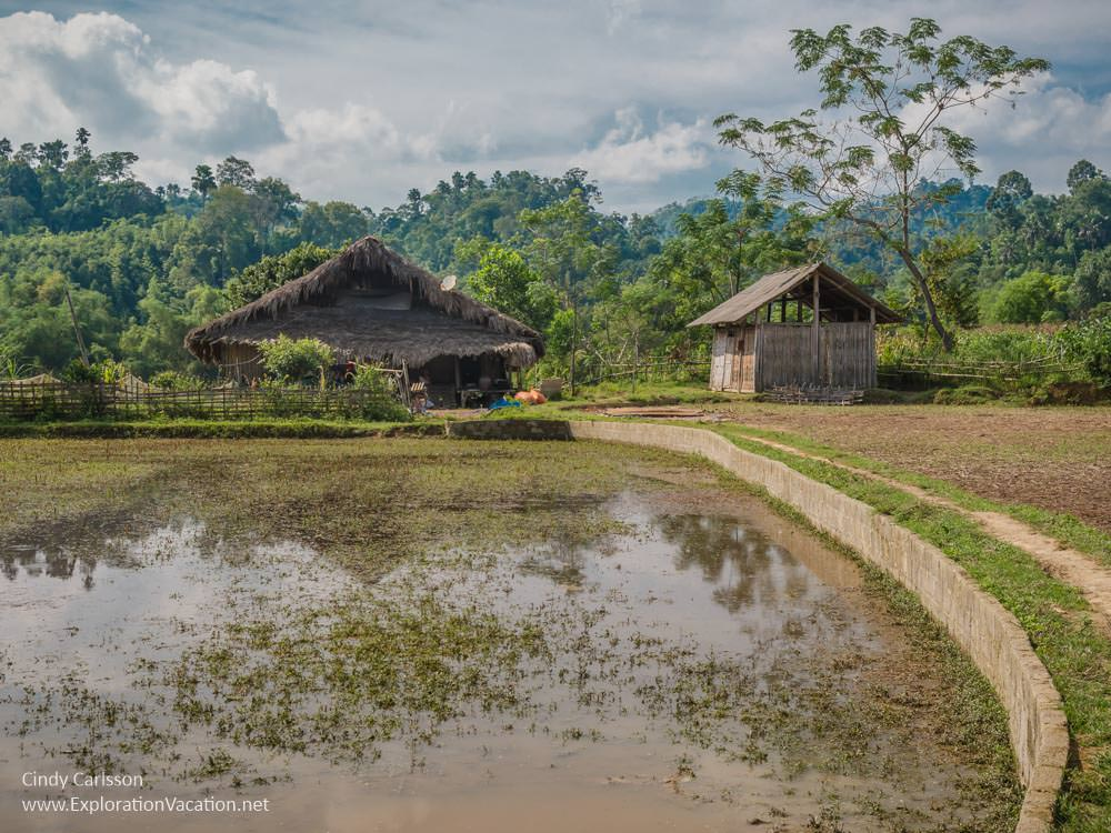 thatched houses and rice field