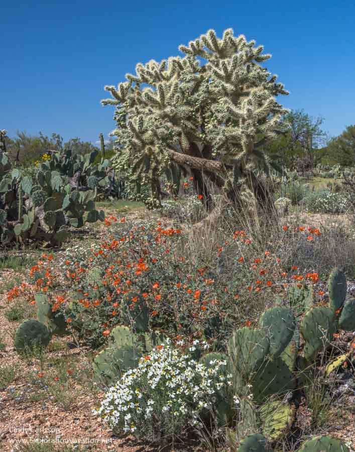 desert scene with cacti and colorful wildflowers