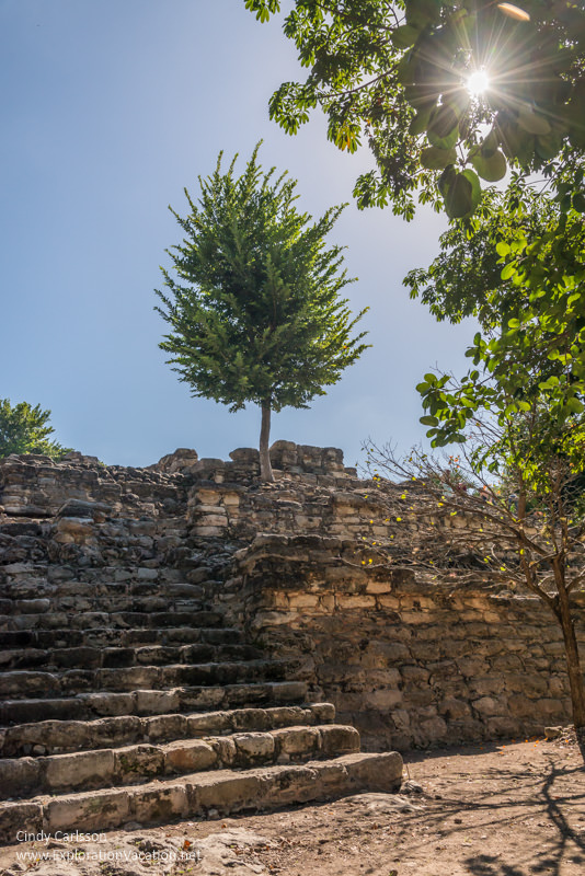 tree growing out of ruins