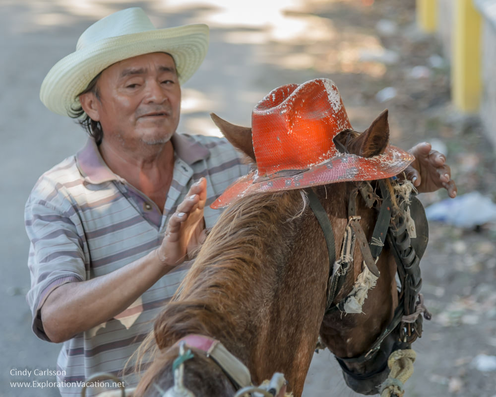 carriage driver adjusts his horse's hat
