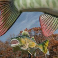 Big Fish- ExplorationVacation.net