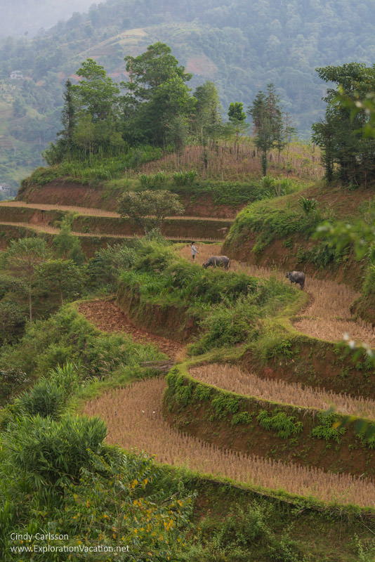 Terraces Northern Vietnam road trip - ExplorationVacation