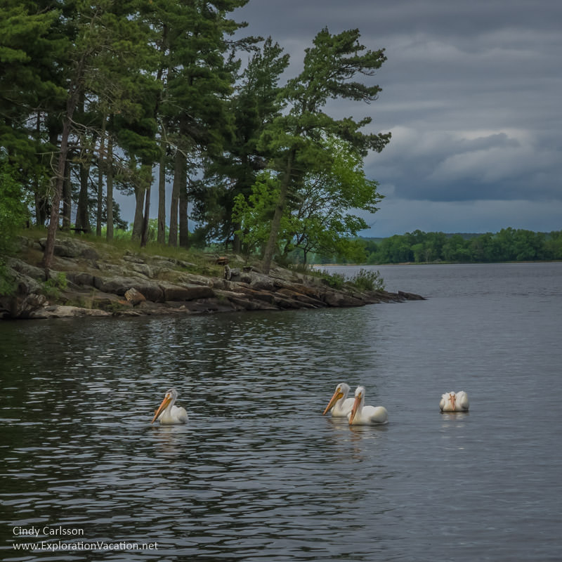 Pelicans on Lake Kabetogama International Falls Minnesota - www.ExplorationVacationnet
