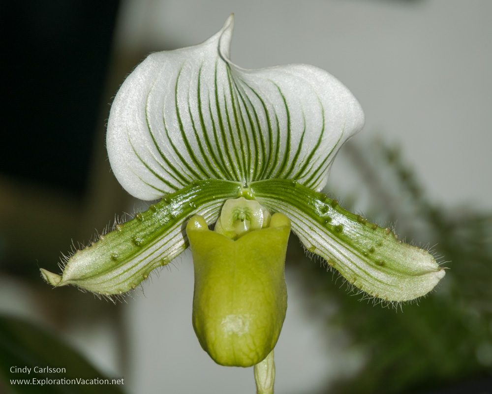 Minnesota state fair favorites - orchids - www.ExplorationVacationnet