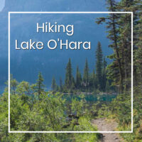 "path to forested lake shore with text ""Hiking Lake O'Hara"""