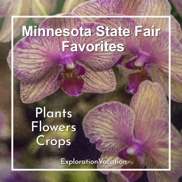 Link to Minnesota State Fair plants, flowers, and crops post