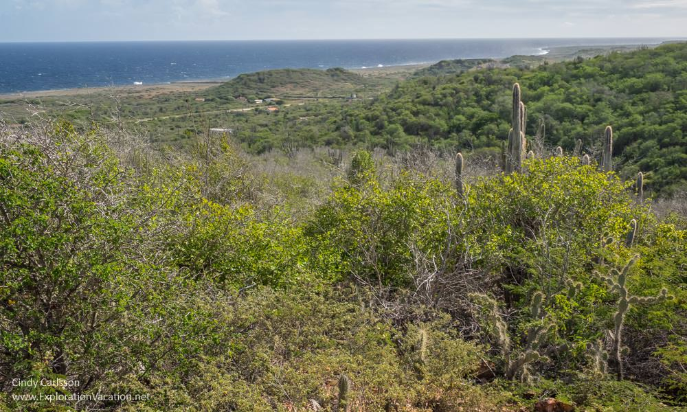 Boka Tabla view along the Mountain Route in Christoffel National Park Curacao - ExplorationVacation.net