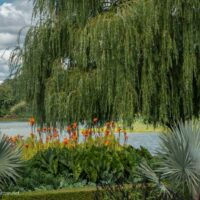 Lakeside gardens at the Chicago Botanic Garden