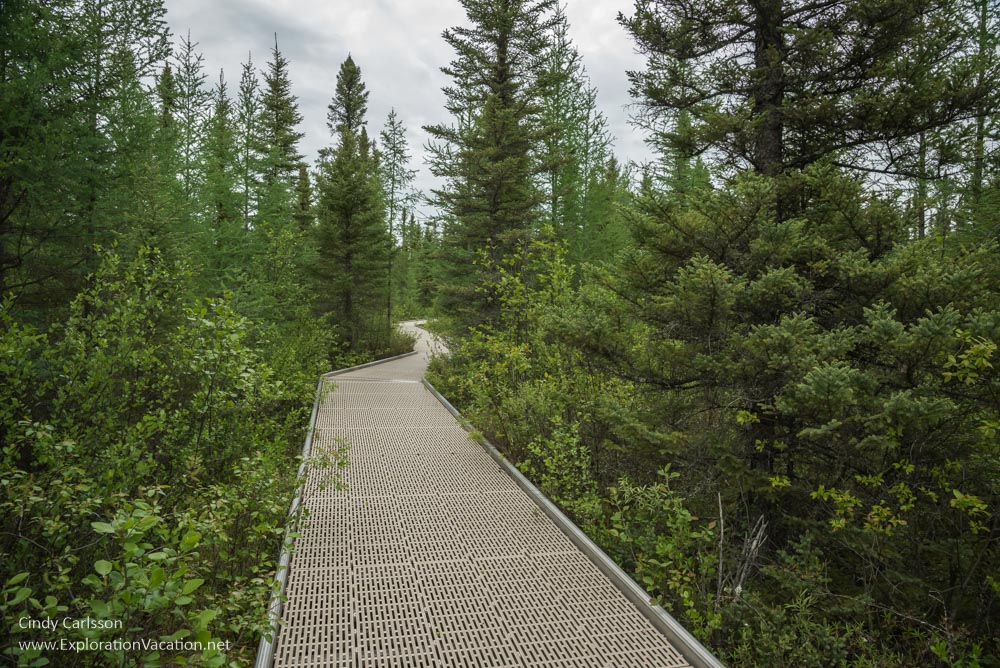 Black spruce and tamarack along the boardwalk in Minnesota's Big Bog State Recreation Area - ExplorationVacation.net