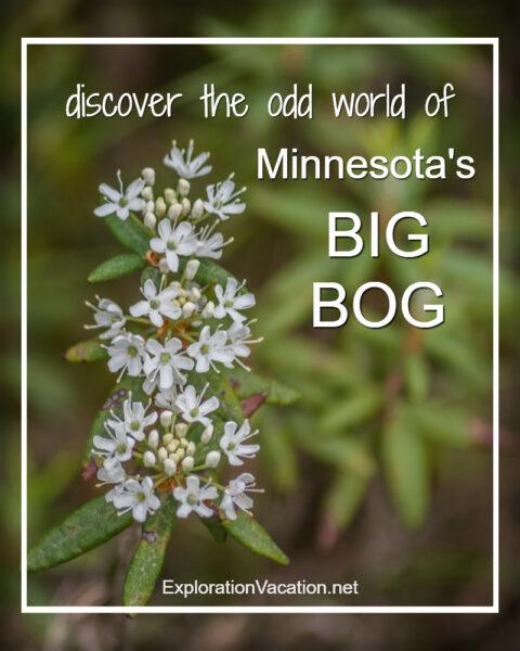 Discover the odd world of Minnesota's Big Bog