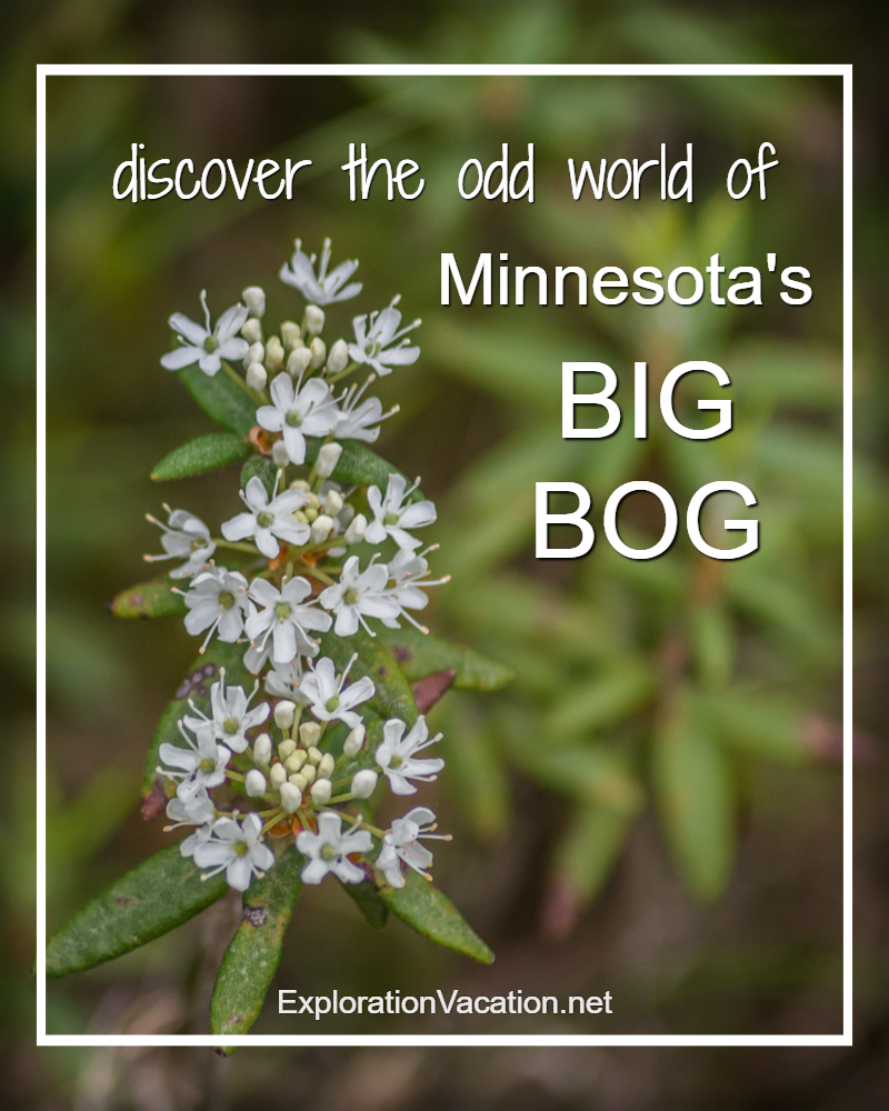 Discover the odd world of Minnesota's Big Bog